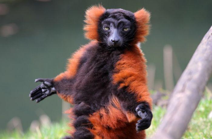 зоопарки в Польше