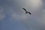 чайки фото