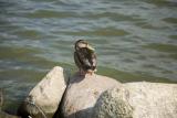 птицы в Польше