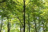 самые известные деревья мира