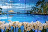Цветы и сад в аквапарке Парк Польши