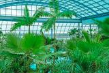 400 пальм в аквапарке Парк Польши