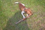 выброшенный кем-то пес