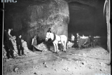 Лошади в шахте