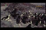Природа антарктического острова