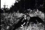 Довоенные съёмки Влодзимежа Пухальского